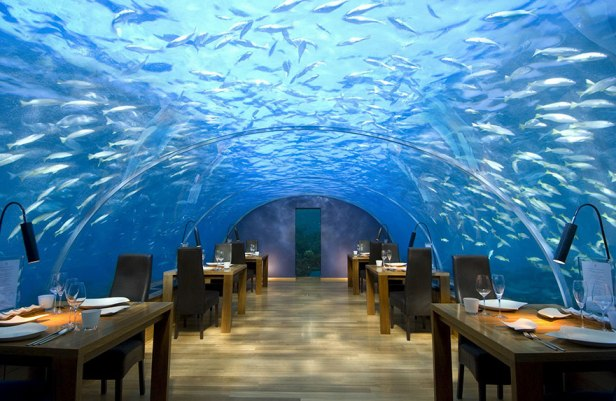 35 Of The World's Most Amazing Restaurants To Eat In Before You Die - Dine Five Metres Below The Surface, Ithaa Undersea Restaurant, Alif Dhaal Atoll, Maldives