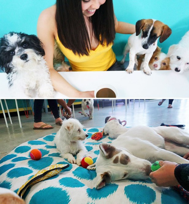 35 Of The World's Most Amazing Restaurants To Eat In Before You Die - Cafe That Lets Animal Lovers Adopt A Dog While Enjoying A Cup Of Coffee, Dog Cafe, LA, USA